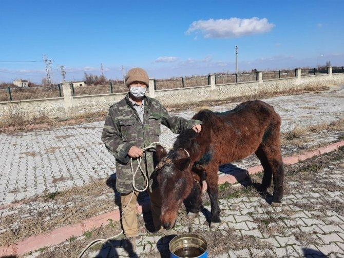 Tedavi edilen at sahiplendirildi