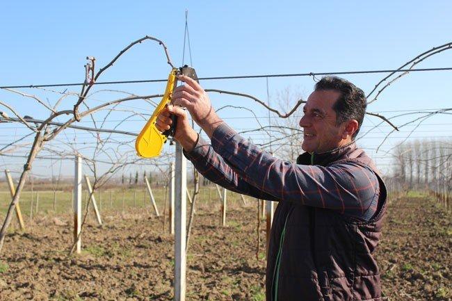 Çarşamba Ovası'nda kivi üretimi artıyor