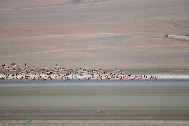Flamingolar, Düden Gölü'ne erken geldi