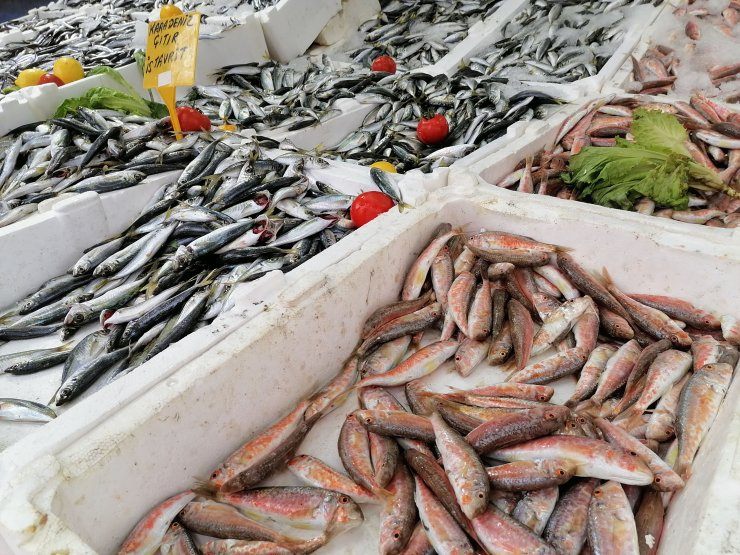 Karadeniz ısındı, balıkların boyve göç yolları değişti