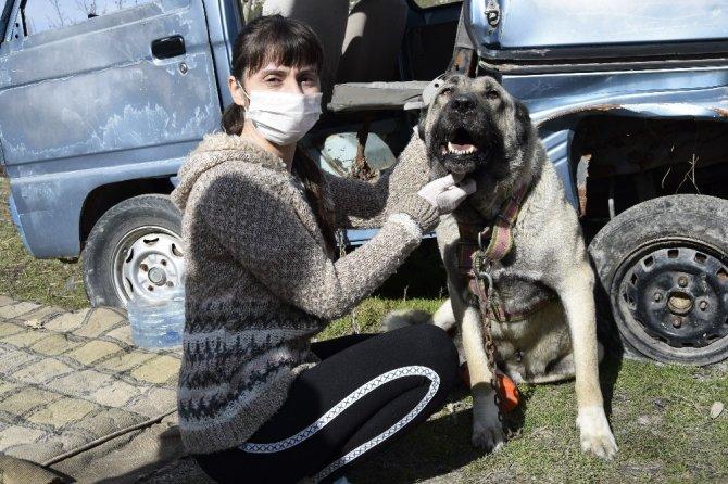 Kazanlar sokak hayvanları için kaynadı