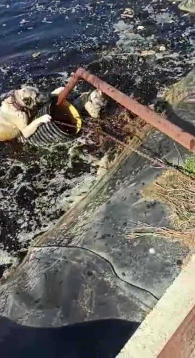 Atık su havuzuna düşen 2 köpek vatandaşlar tarafından kurtarıldı