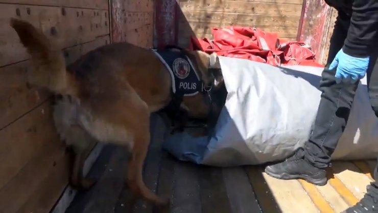 Konya'da tırdakibrandaya sarılı32 kiloesrarı 'Lucky' buldu