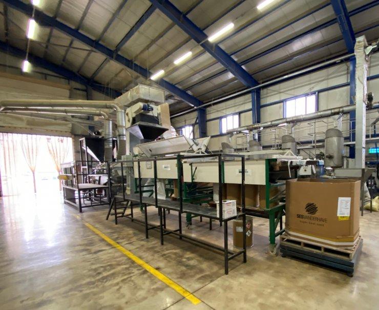 Konya Ovası'nda ayçiçeği üretimi, 260 bin tona çıktı