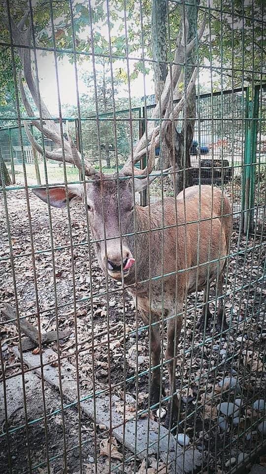 Hayvanat bahçesinden çaldığı alageyiği vuran kişiye 61 bin lira ceza