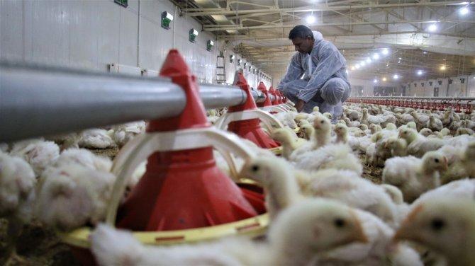 Devlet desteği ile çiftlik kurdu, yılda 300 bin TL kazanmaya başladı