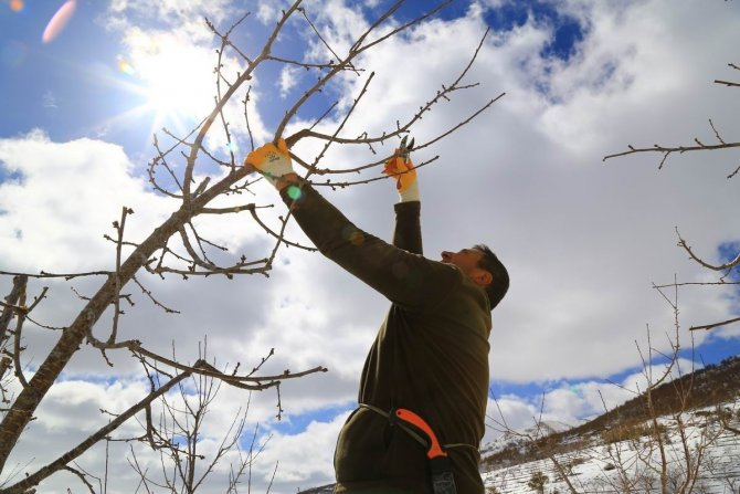 Toroslar'daki kiraz bahçeleri kar altında yeni sezona hazırlanıyor