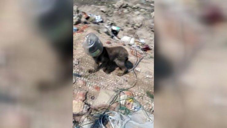 Hayvanları beslemeye gitti, kafası bidona sıkışan köpeği kurtardı