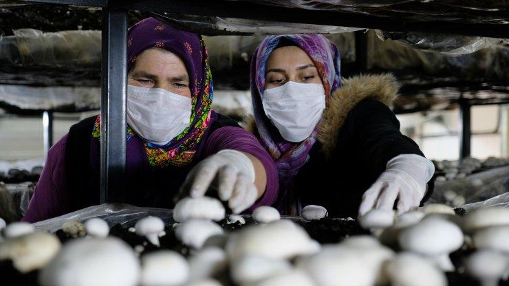 Konya'da gelin-kaynana, tarımın yapılamadığı Orta Toroslar'da mantar üretiyor