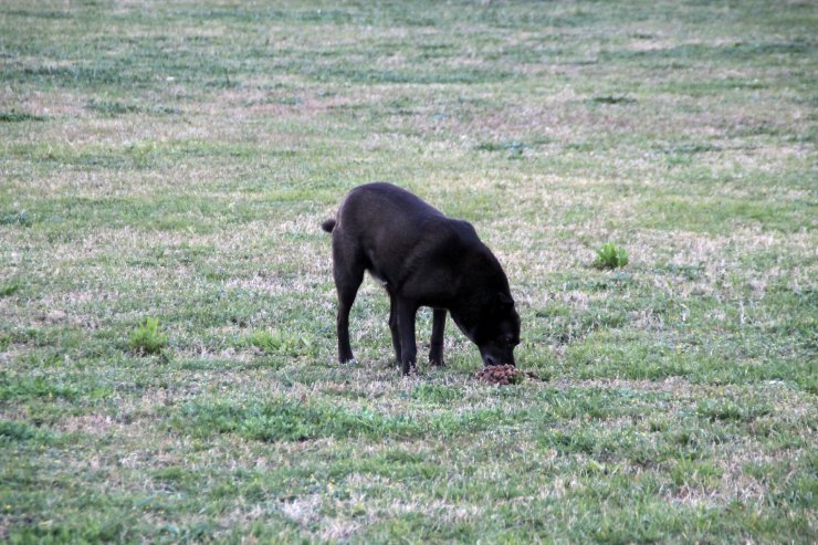 Sokak köpeklerini zehirleyenlerin bulunması için para ödülü koydu