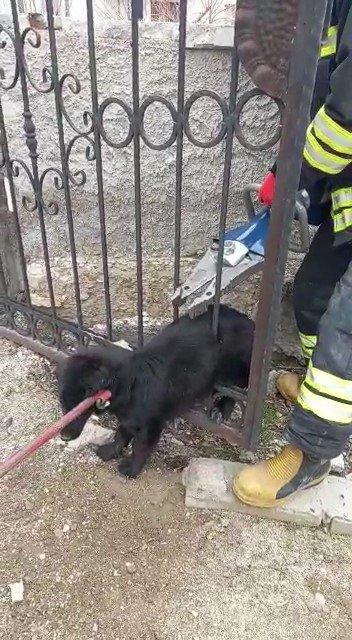 Demir parmaklıklara sıkışan köpeği itfaiye kurtardı