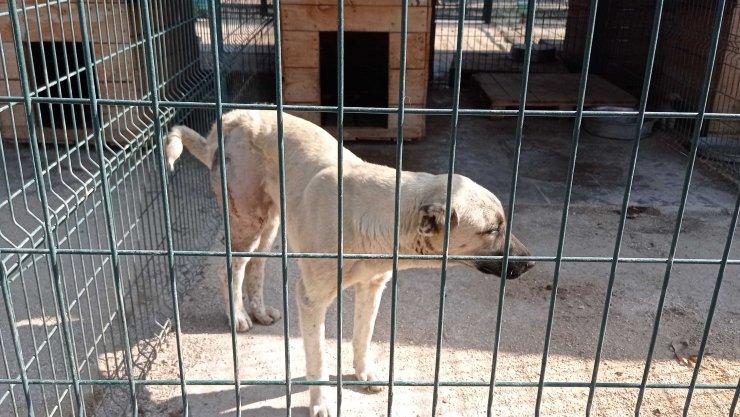Otomobilin çarptığı köpek sokak köpeği, tedaviye alındı
