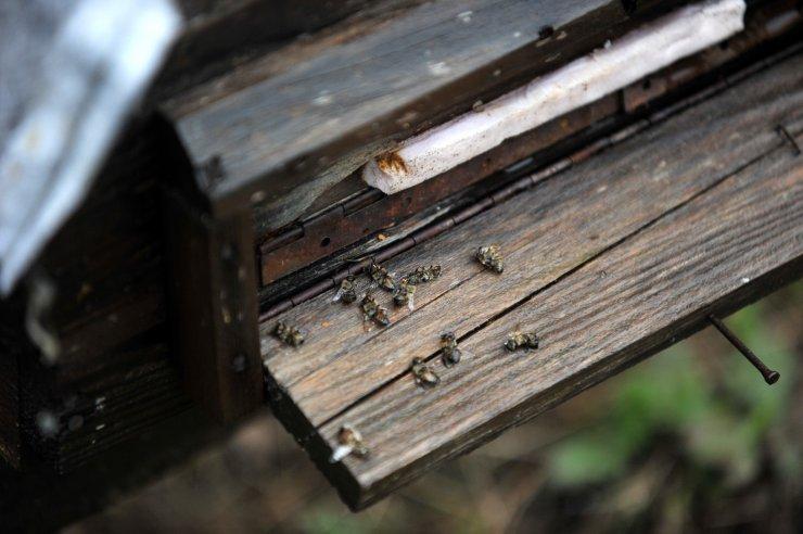 Mevsim normallerinin altındaki sıcaklık nedeniyle arı ölümleri arttı