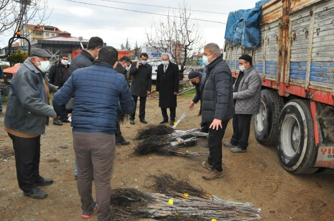 Akşehir'de üreticilere ceviz fidanı dağıtıldı