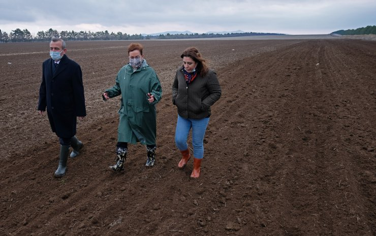 Konya Ovası'na susuz tarım için 'Sorgül' buğdayı