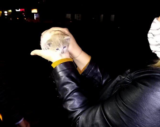 Otomobilin motoruna sıkışan inatçı yavru kedi zor kurtarıldı