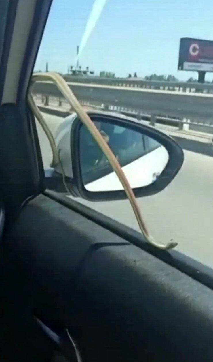 Seyir halindeyken otomobilin camındaki yılanı gördüler