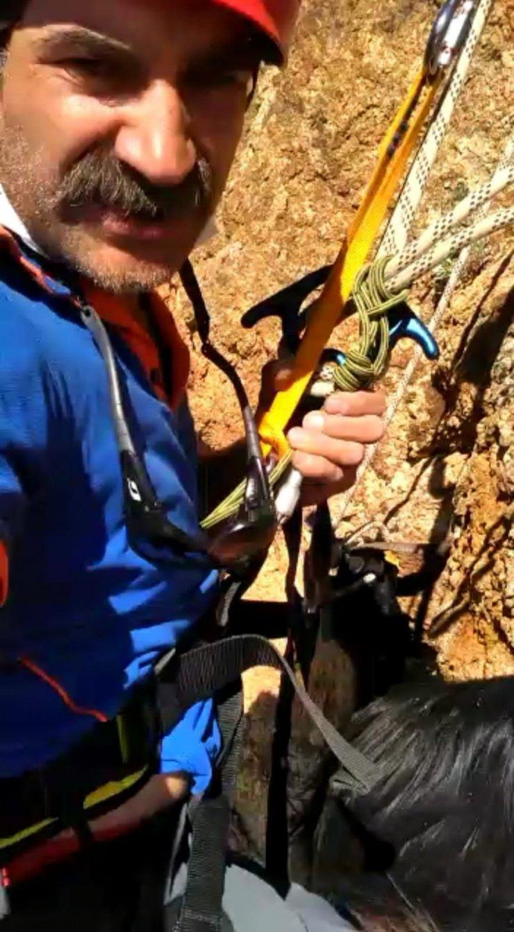Kurttan kaçıp uçurumda mahsur kalan keçiyi AFAD ekibi kurtardı