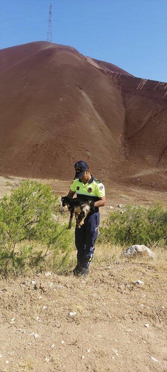 Kaybolan yavru keçiye jandarmadan şefkat eli