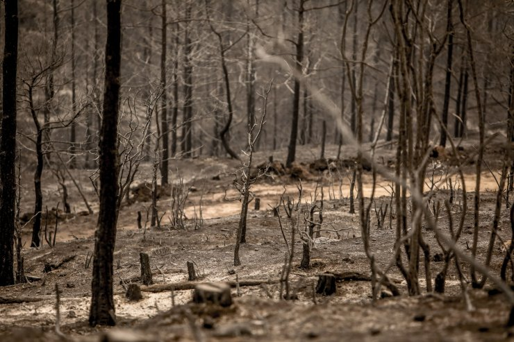 Manavgat'taki büyük yangın 3'üncü gününde