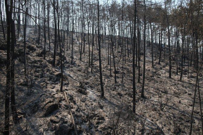 Dünyanın ciğerleri yanıyor: 40'tan fazla ülkede ormanlar alev alev