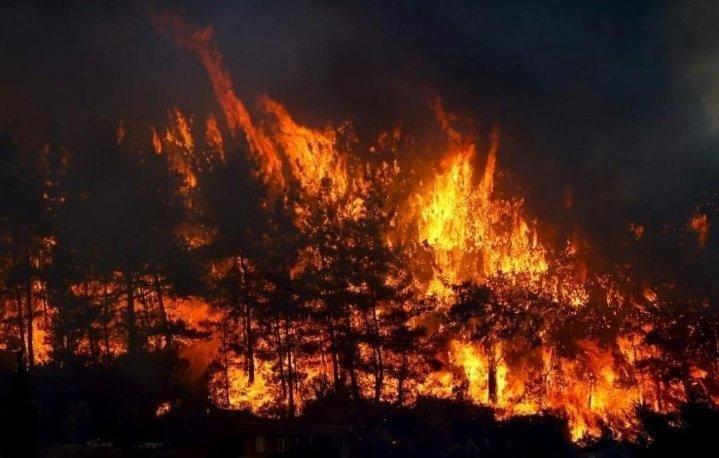 Orman yangını; 7 hektarlık alan zarar gördü