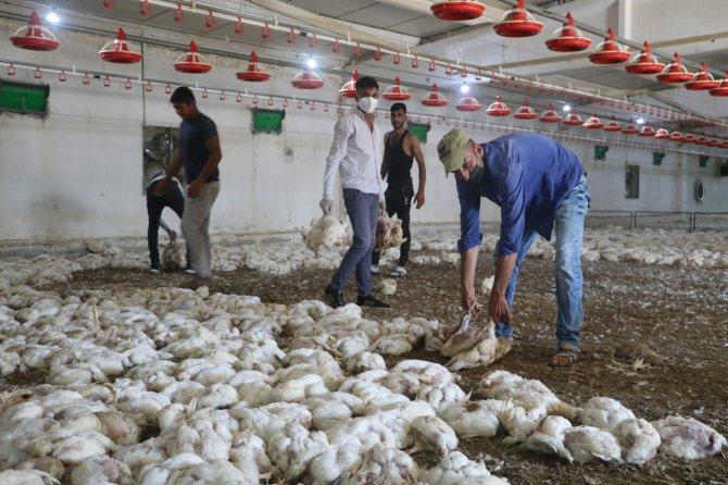 Havasız kalan 35 bin tavuk telef oldu