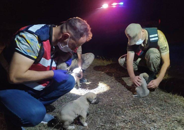 Devriyede terk edilmiş 6 yavru köpek buldular