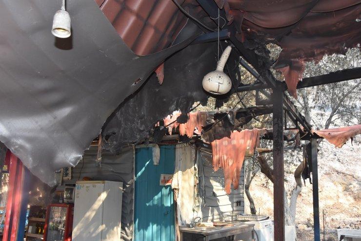 Milas'taki yangında 3'üncü gün; havadan müdahale yeniden başladı