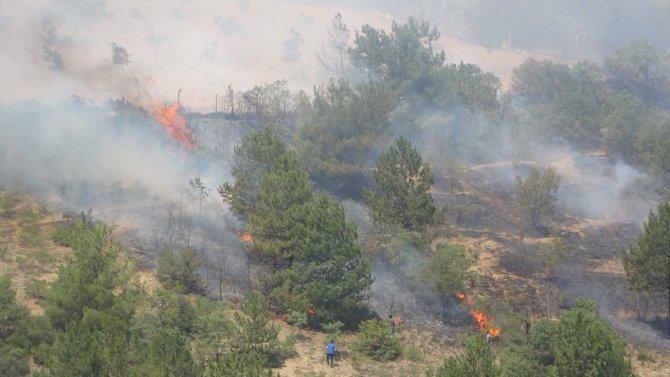 Çıkan 2 orman yangını kontrol altına alındı