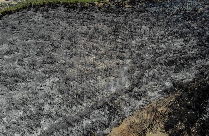 Muğla Kavaklıdere'de boşaltılan köylere geri dönüş başladı