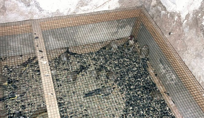 Saka kuşu ticaretine 120 bin lira ceza kesildi