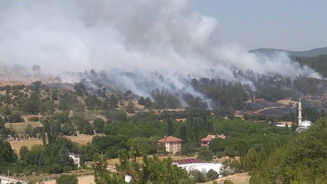 Uşak'ta arazide çıkan yangın, ormana sıçradı