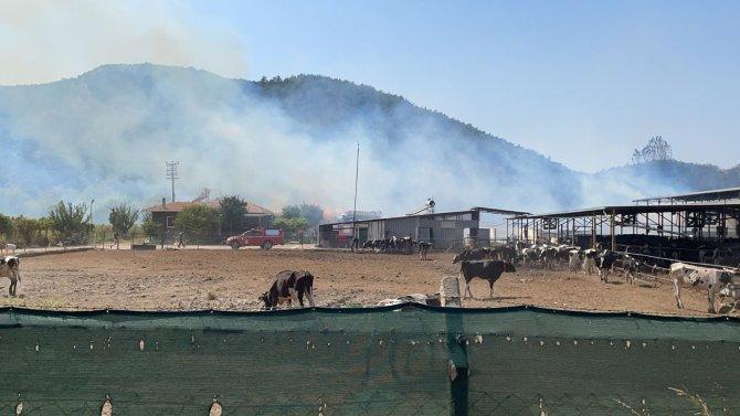 Hayvan çiftliğine sıçrayan yangın söndürülmeye çalışılıyor