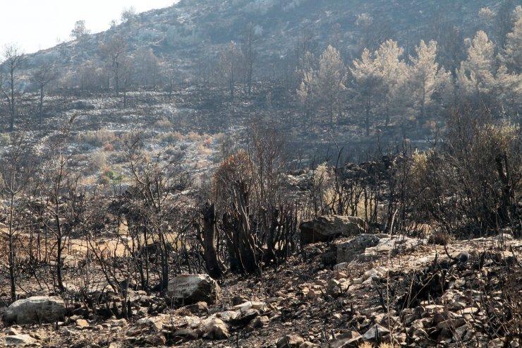 5 milyon lira gelir getiren defne sahası yandı