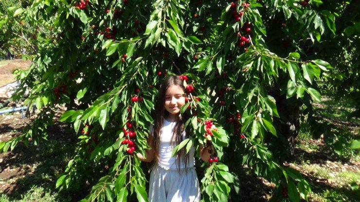 Çiftçiler, sebze meyvelerini taşımak için teleferik yaptı