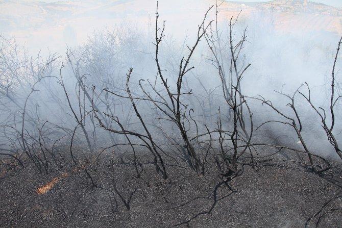 7 dönüm zirai alan yandı