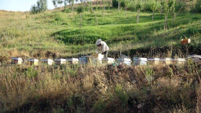 Devletin desteğiyle aracılık yapmaya başladı, 500 kilo bal elde etmeyi başardı