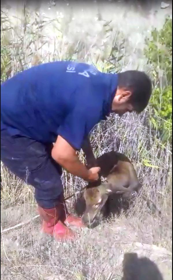 Kuyuya düşen geyiği itfaiye kurtardı
