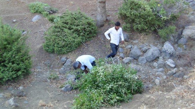 Kuraklıktan dolayı saman biriktiremeyen besiciler, meşe yaprağı stokluyor