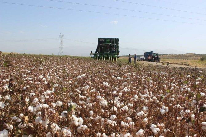 Pamuk ekimi yüzde 50 arttı
