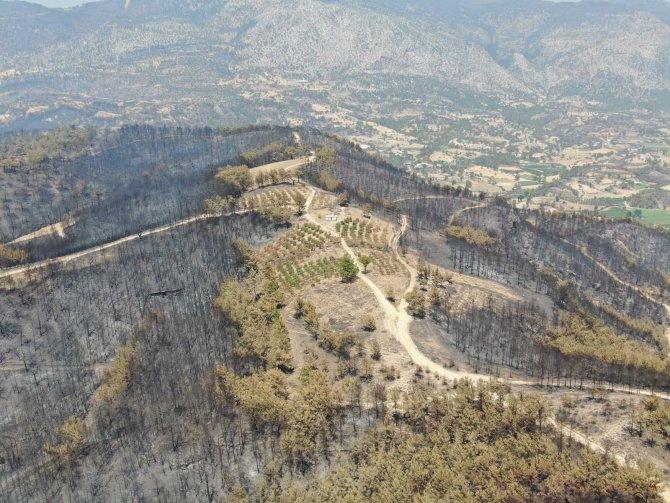 Manavgat'ta yanan alanlara keçiboynuzu ekilsin önerisi