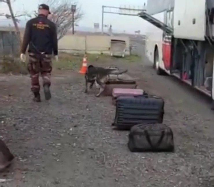 Yolcu otobüsünde, bavuldaki uyuşturucuları 'Daxo' buldu