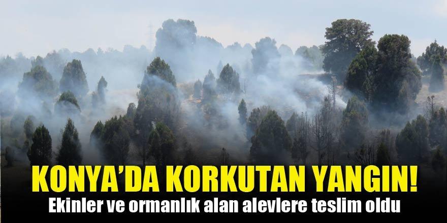 Konya'da korkutan yangın! Ekinler ve ormanlık alan alevlere teslim oldu