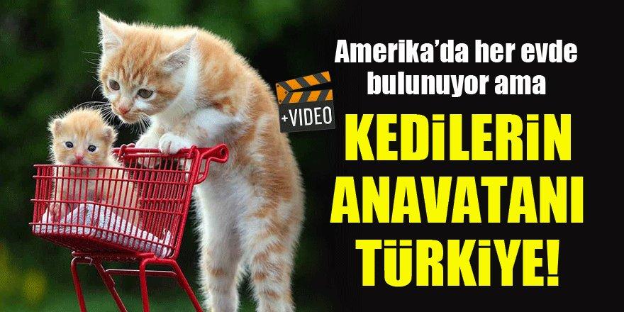 Kedilerin anavatanı Türkiye