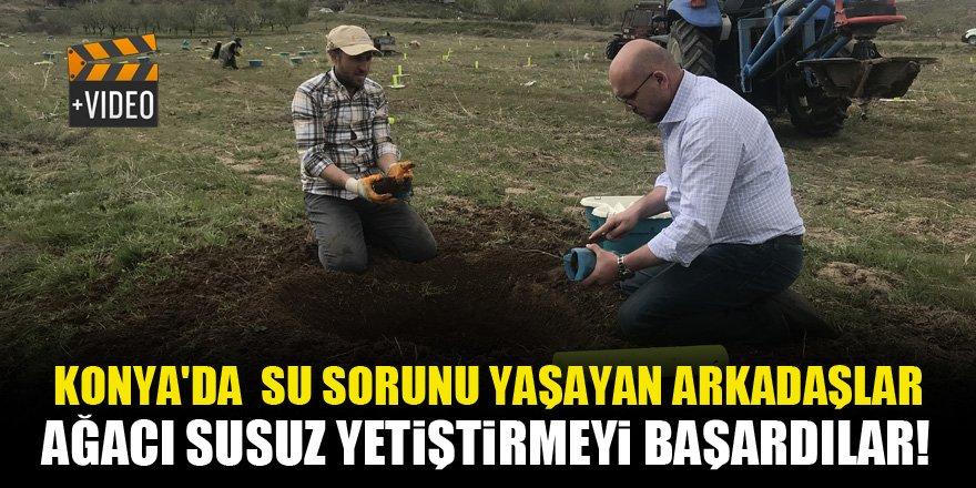 Konya'da su sorunu yaşayan arkadaşlar, ağacı susuz yetiştirmeyi başardılar!