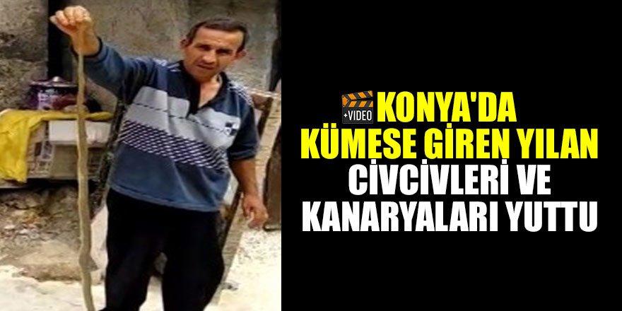 Konya'da kümese giren yılan civcivleri ve kanaryaları yuttu
