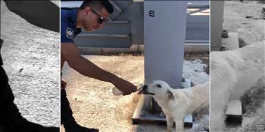 Polisin sokak köpeğine merhameti takdir topladı