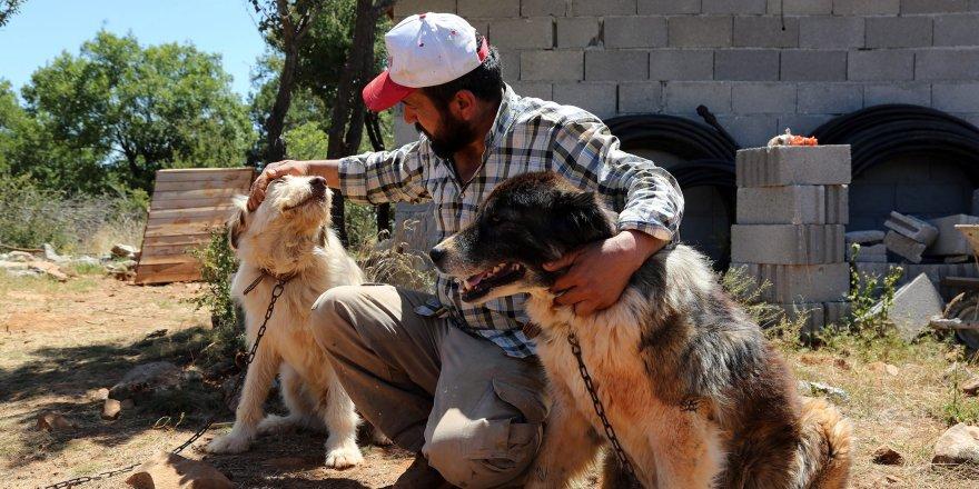 Konya'da Gönüllü Hayvan Dostları Projesi Türkiye'ye örnek oluyor
