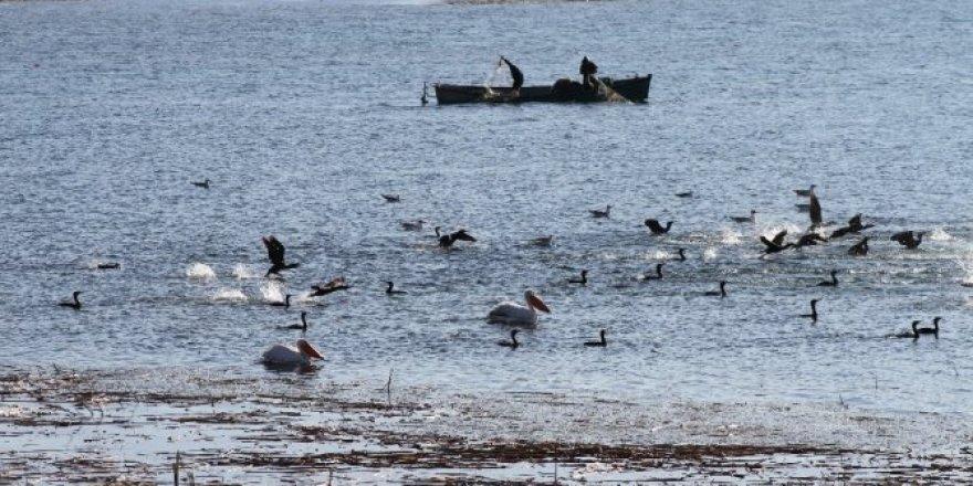 Karabatak sürüleri balıkçıların korkulu rüyası haline geldi